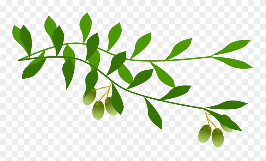 Olive Branch Leaf Laurel Wreath Tree.