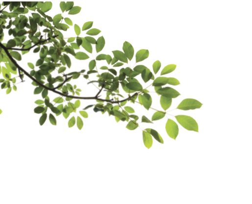 Free Branch With Leaves Png, Download Free Clip Art, Free.