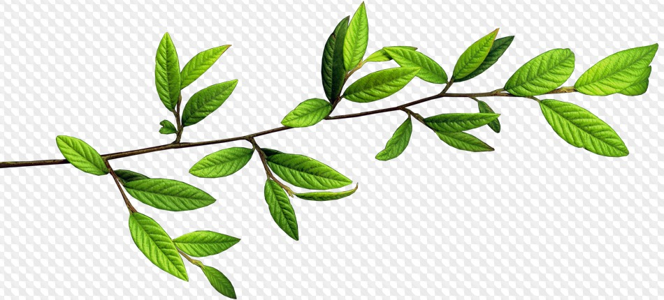 Tree Branches With Leaves Png (+).