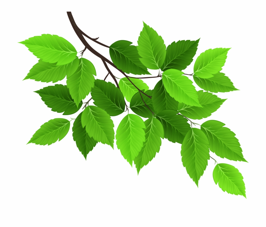 With Green Leaves Leaf Branch Hd Image Free Png Clipart.