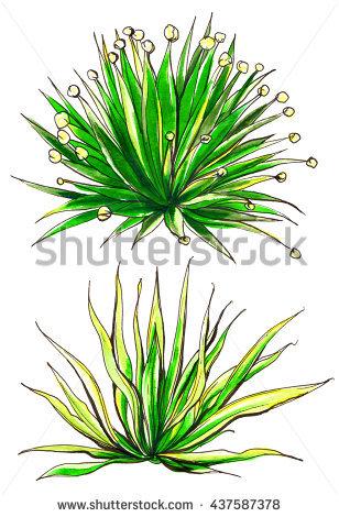 Watercolor Succulent Clip Art Stock Photos, Royalty.