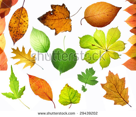 Leaf Capillaries Gleam Stock Photos, Royalty.