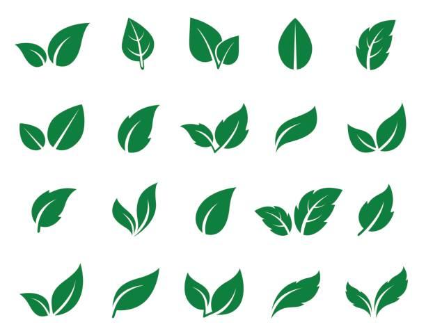 Best Leaf Illustrations, Royalty.