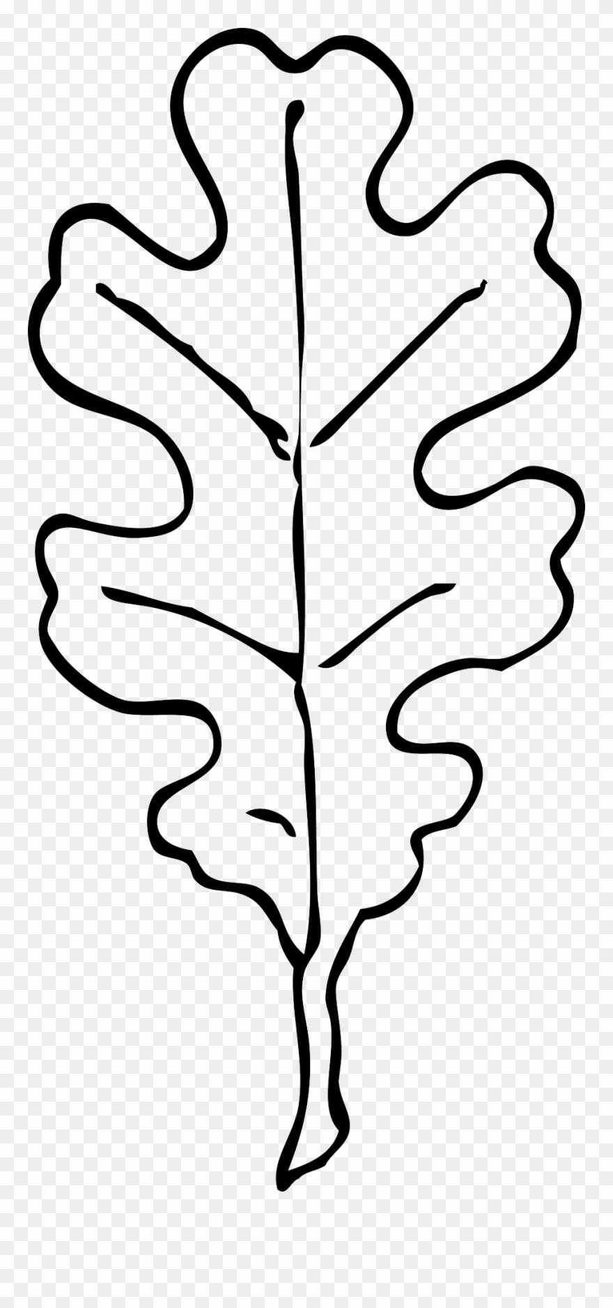 Oak Leaf Black White Line Art Clipart Panda Free Clipart.
