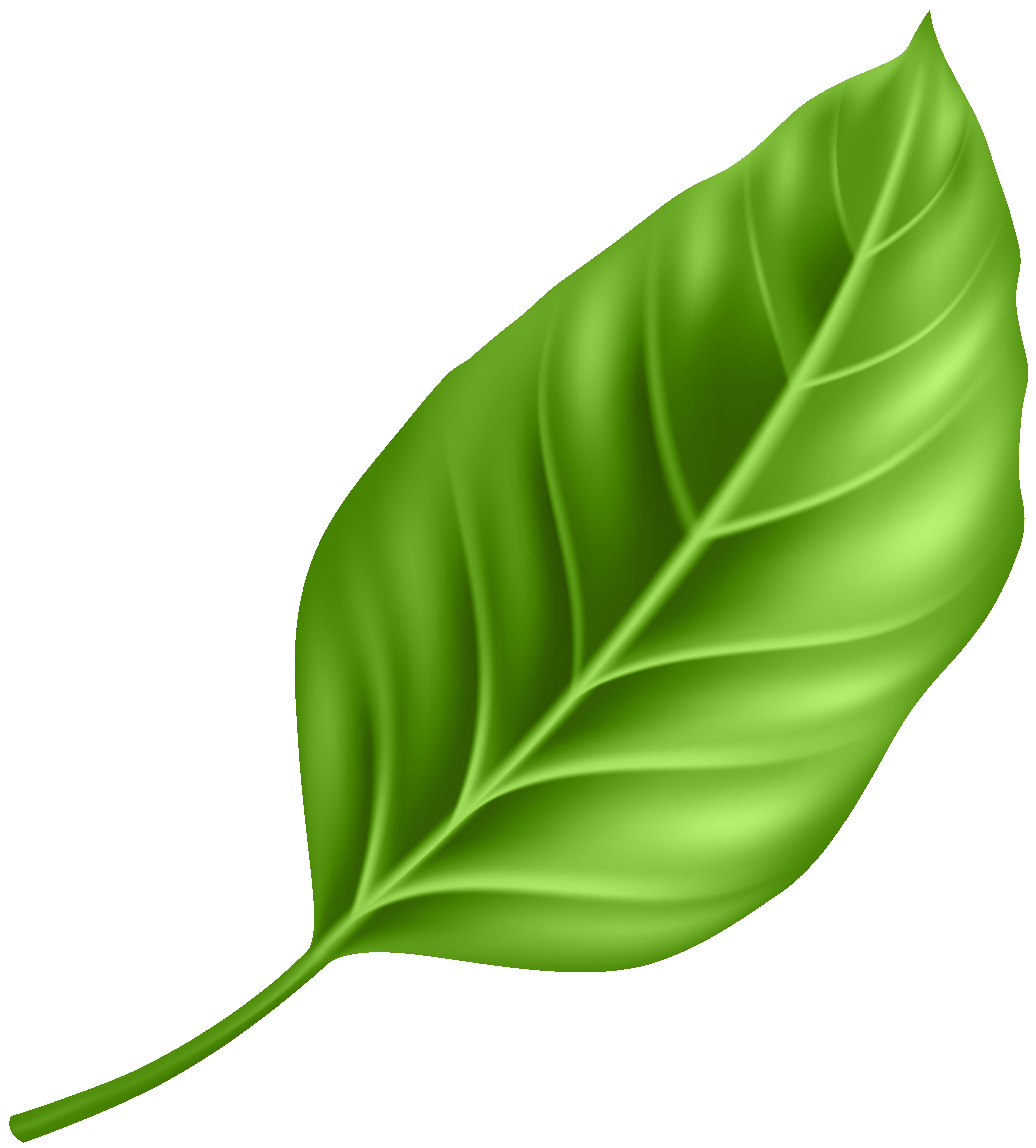 Leaf PNG Clipart.