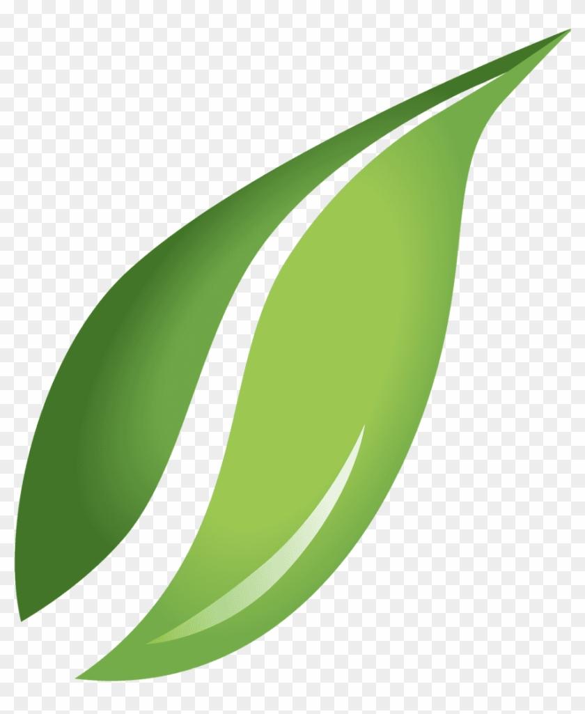 Transparent Background Leaf Clipart Png, Png Download.
