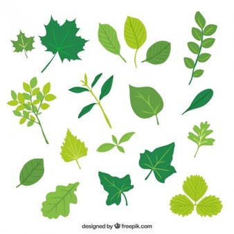 Leaf Vectors, Photos and PSD files.