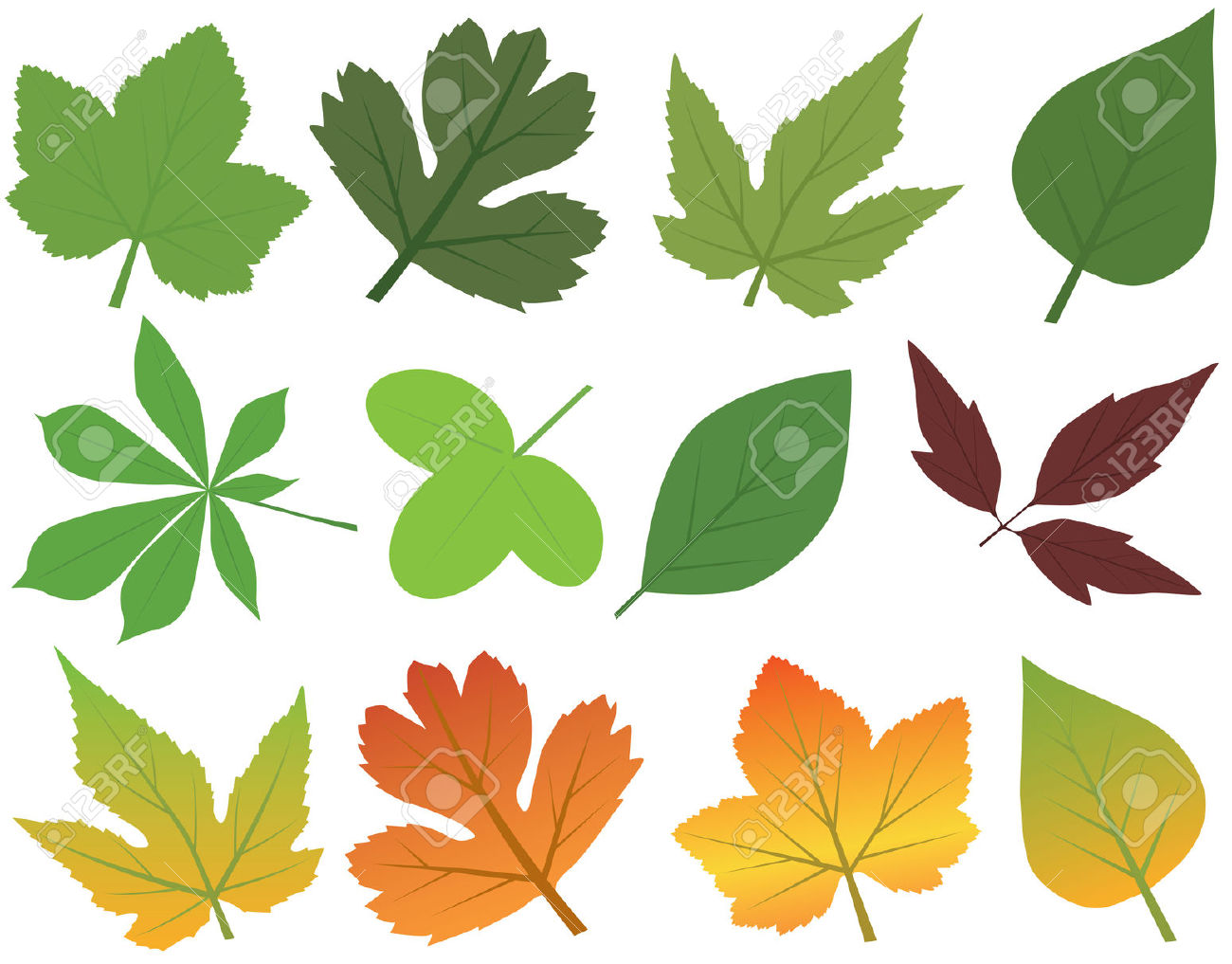 Vector Leaf Collection Royalty Free Cliparts, Vectors, And Stock.