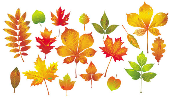 Autumn Leaf Collection.