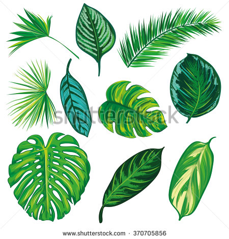 Leaf Vector Stock Images, Royalty.