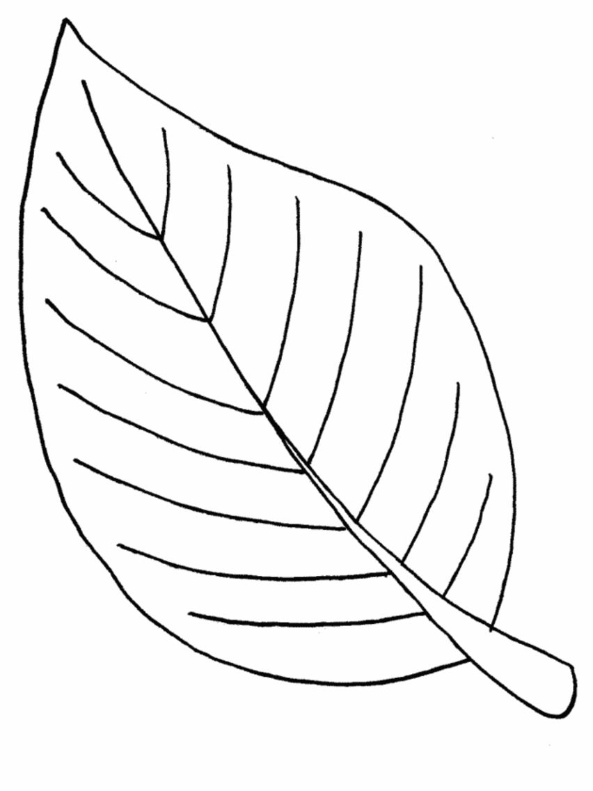 Printable 50 Leaf Coloring Pages 621.