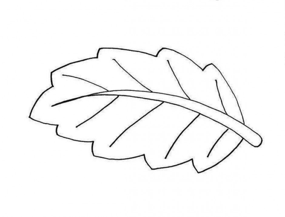Leaf Black And White Clipart.