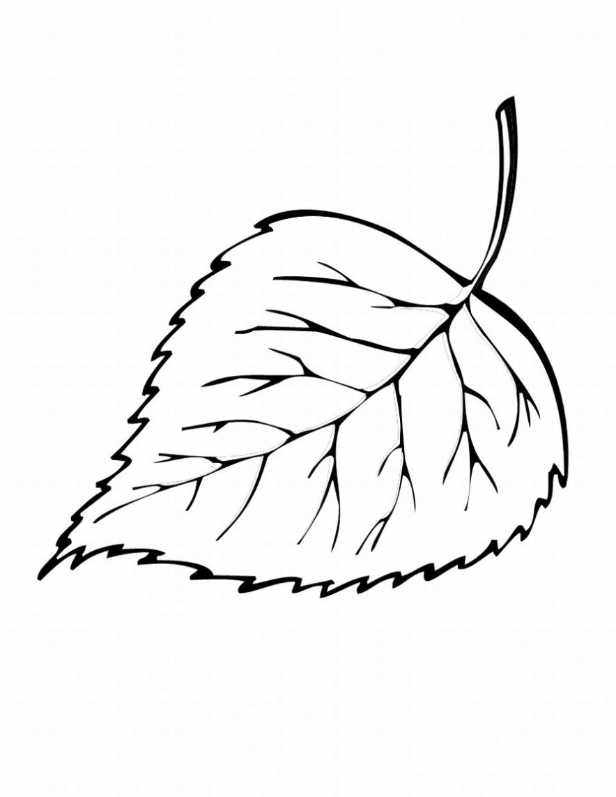 Leaf coloring clipart - Clipground