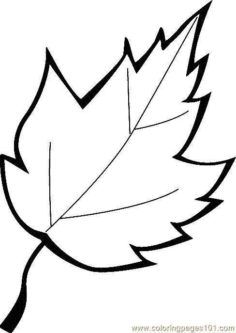 free printable coloring image Leaf Coloring Page 13.
