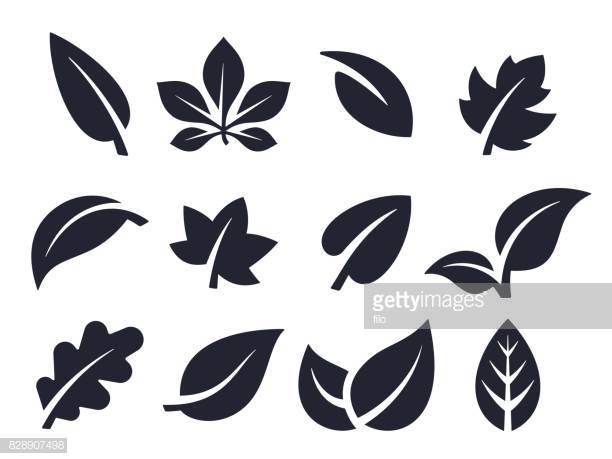 60 Top Leaf Stock Illustrations, Clip art, Cartoons, & Icons.