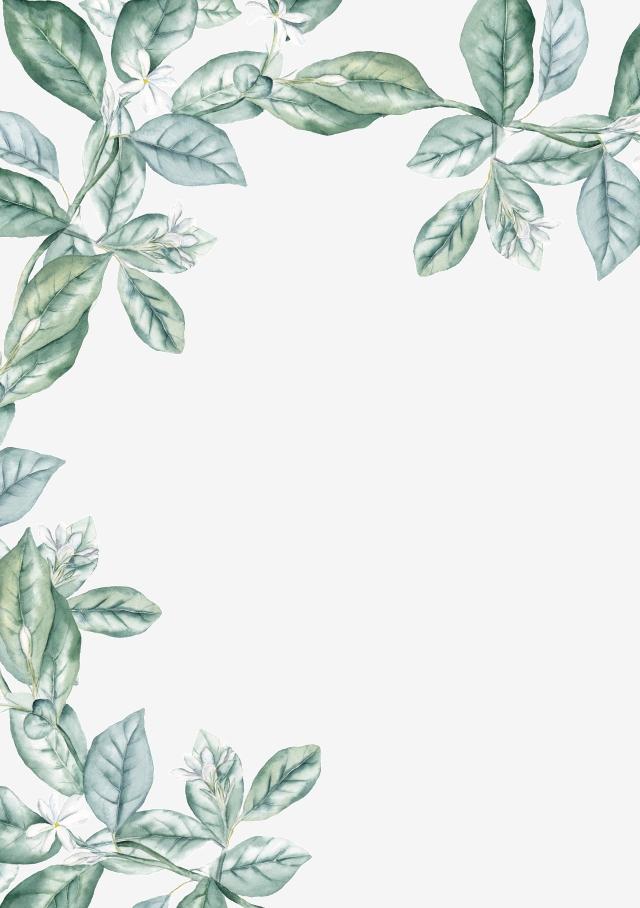 Leaf PNG Images.