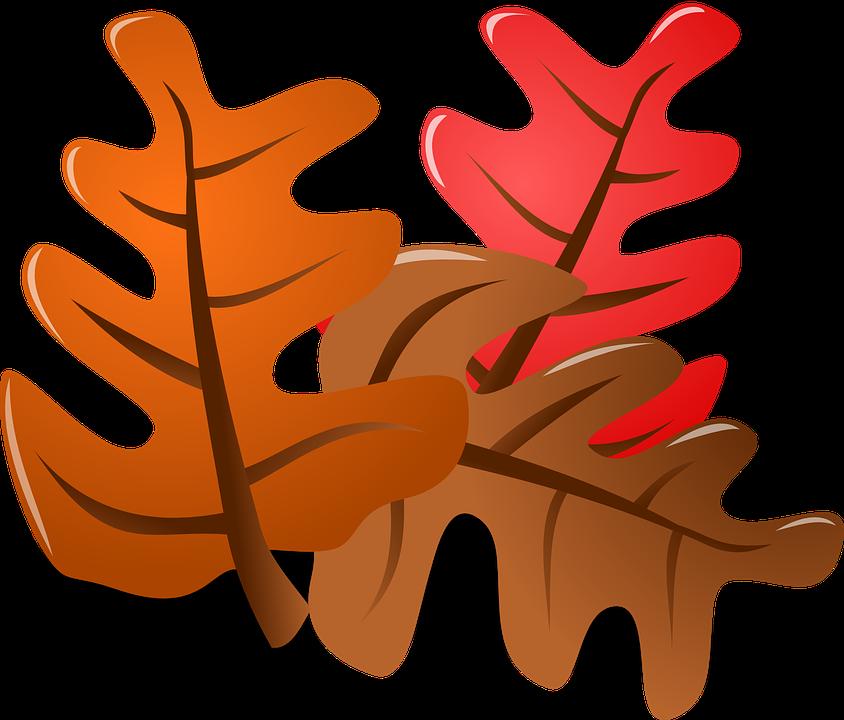 Autumn, Leaves.