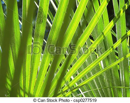 Stock Photographs of lush leaf fan.