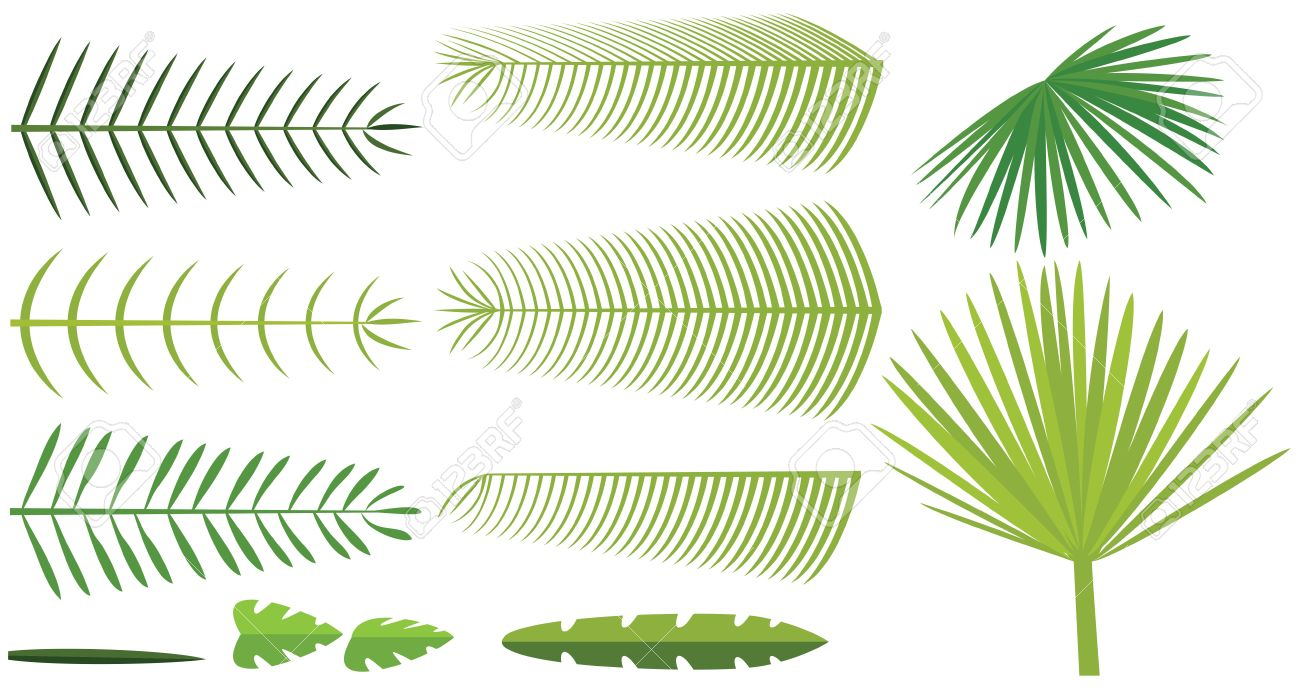 Fan Leaf Stock Photos Images. Royalty Free Fan Leaf Images And.