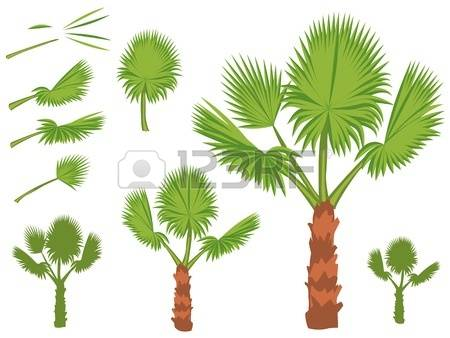 Palm Leaf Fan Stock Photos & Pictures. Royalty Free Palm Leaf Fan.
