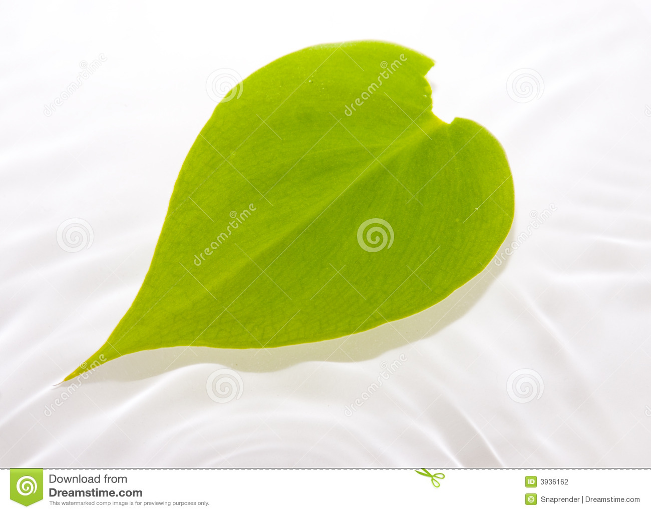 Leaf Floating In Water Stock Photography.