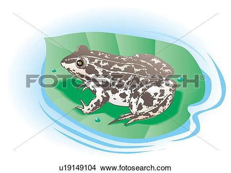 Drawings of Frog on leaf floating on water, high angle view.
