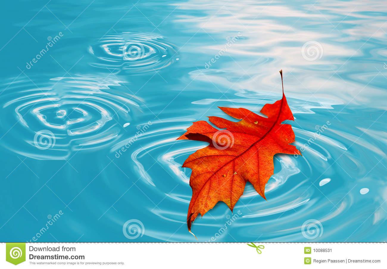 Floating Leaf Stock Image.
