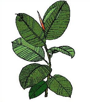 Free Leaf Clipart.