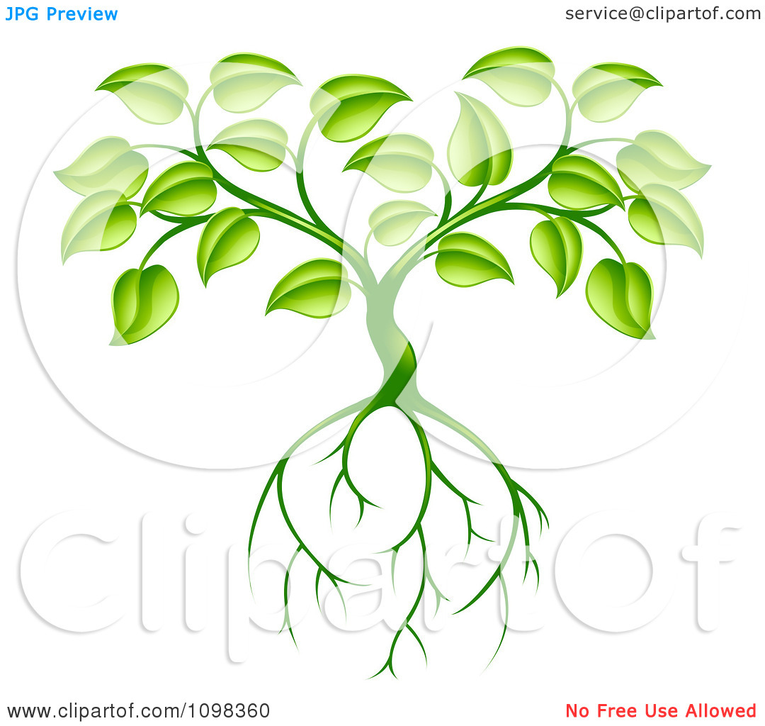 Clipart Green Plant With Leaves And Deep Roots.