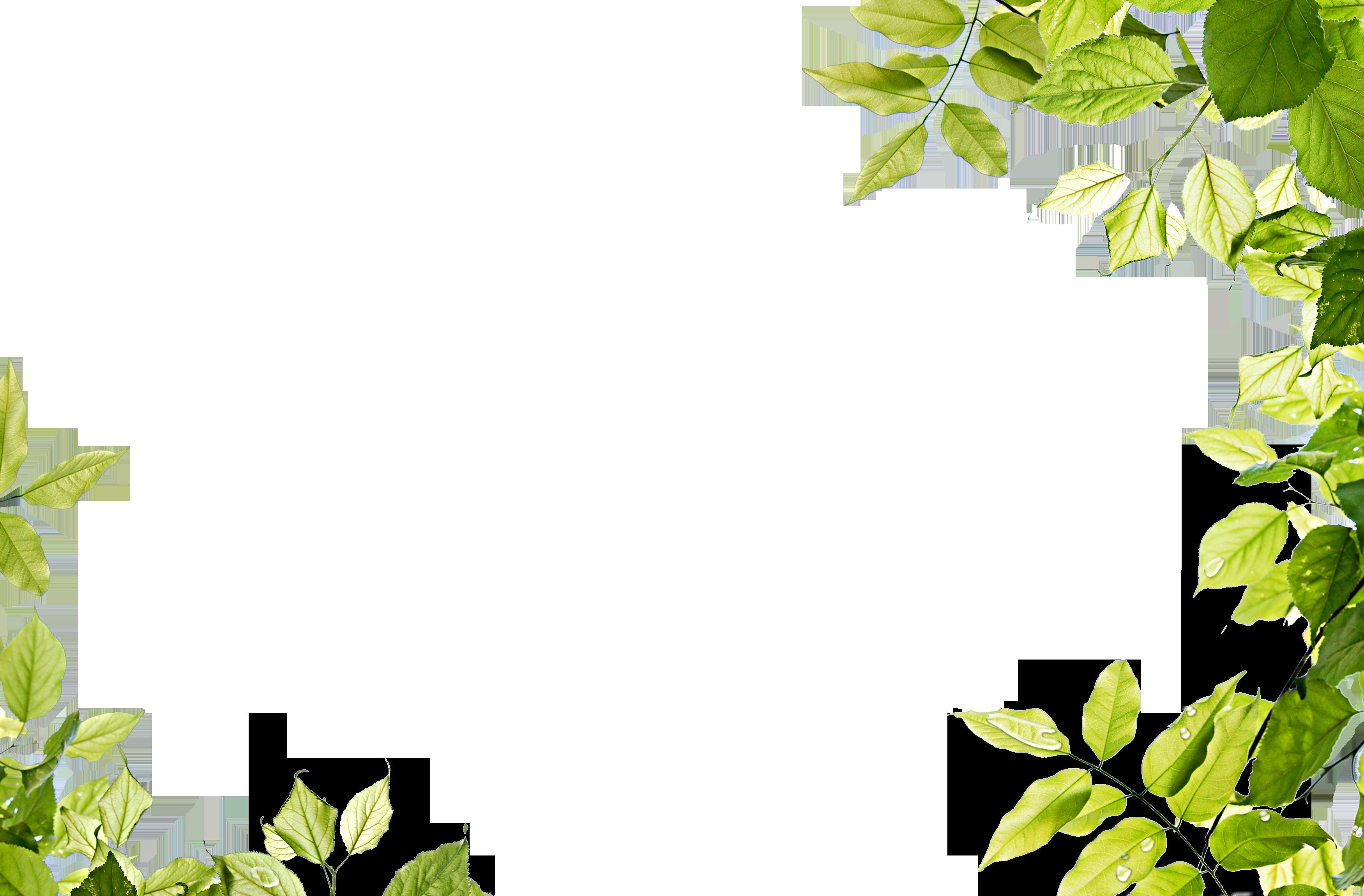 Download Leaf Frame Transparent PNG.