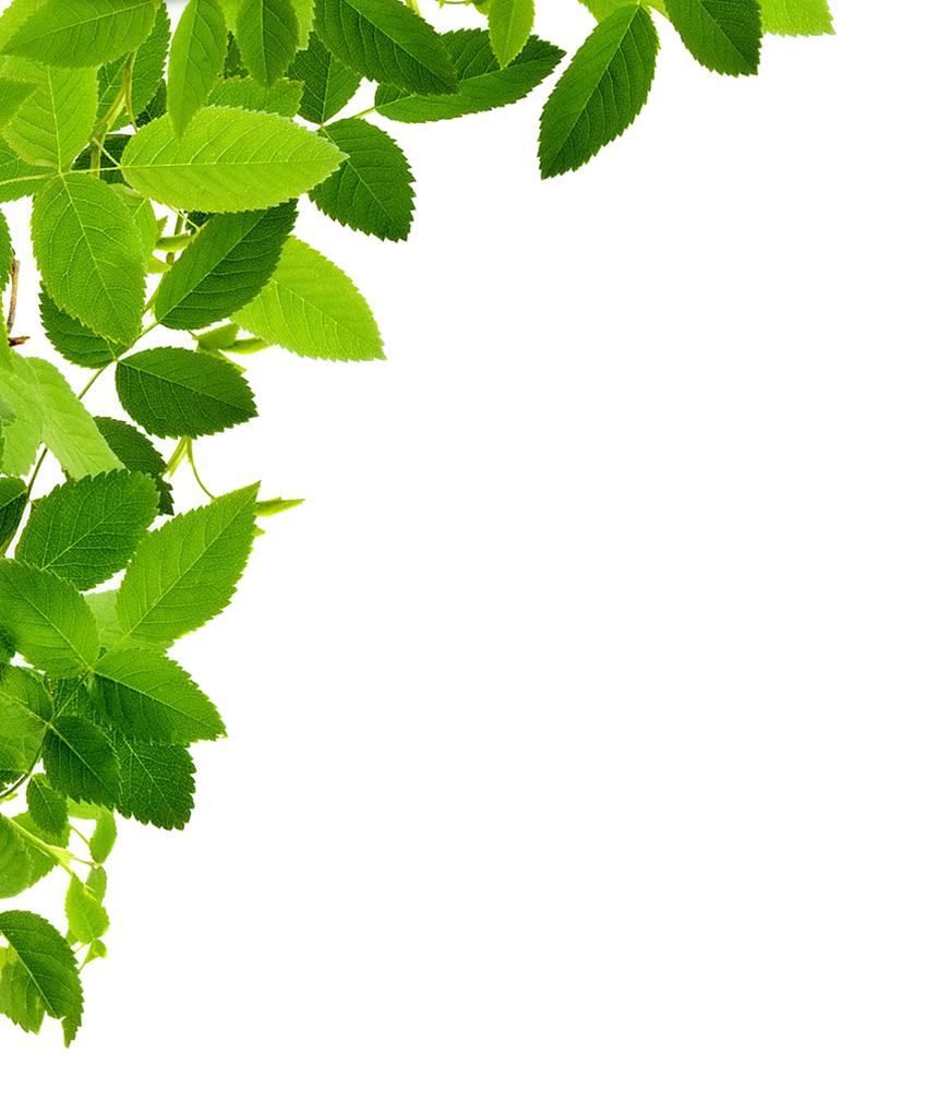 Download Leaf Frame PNG Image.