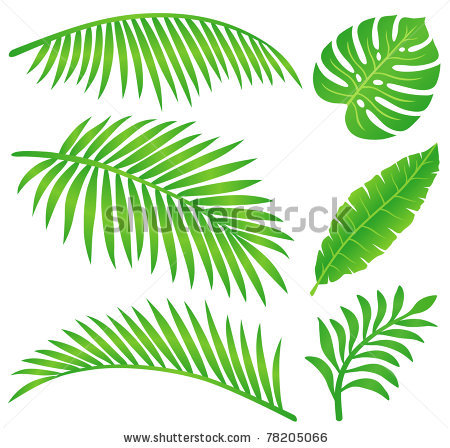 Tropical leaf clipart.