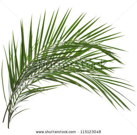 Leaf Fronds Stock Photos, Royalty.