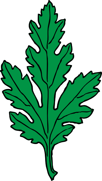 Ivy Leaf Green Chrysanthemum clip art Free Vector / 4Vector.