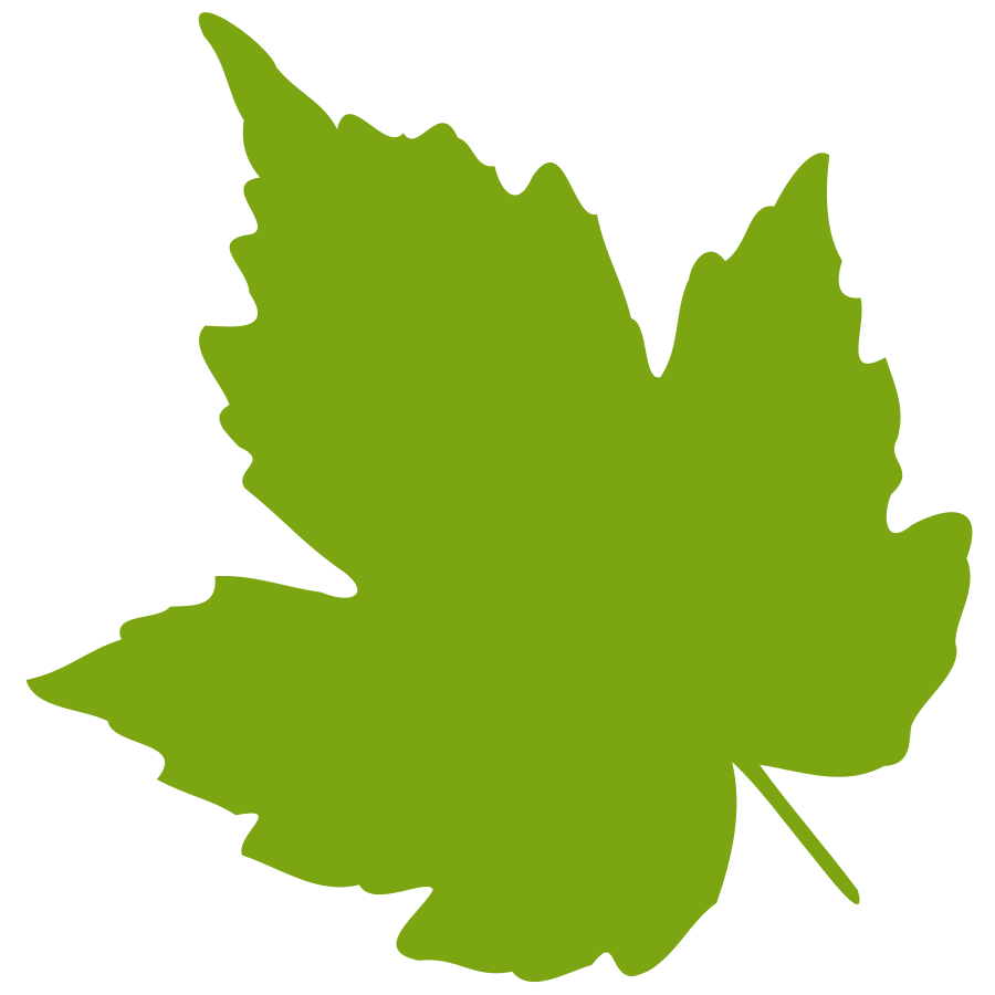 Birch leaf clipart free images.