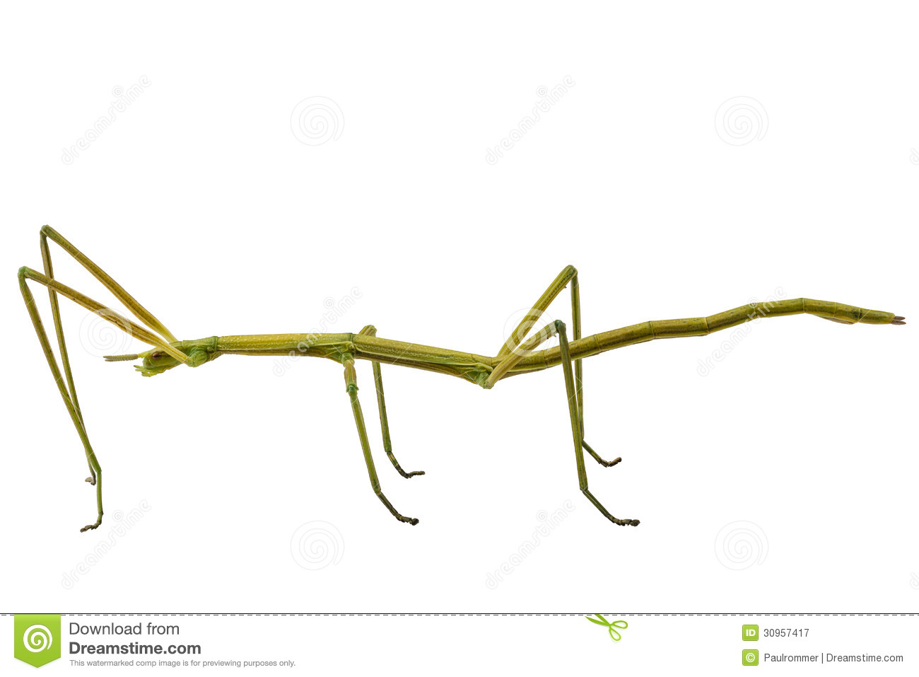 Showing post & media for Walking stick insect cartoon.