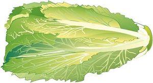 Lettuce Clipart.