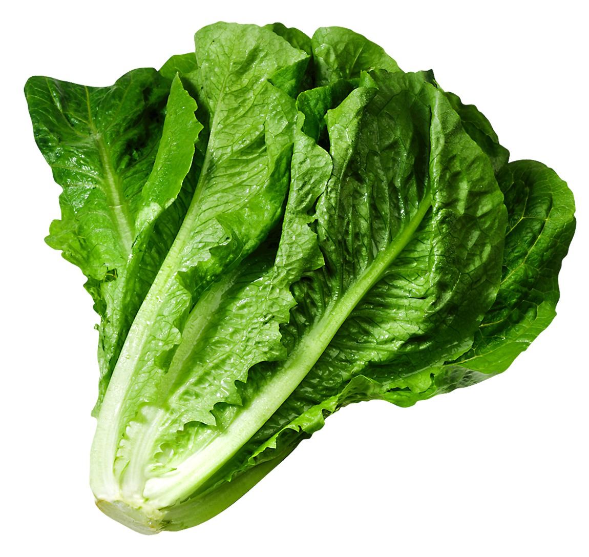 Lettuce clipart 20 free Cliparts | Download images on ...