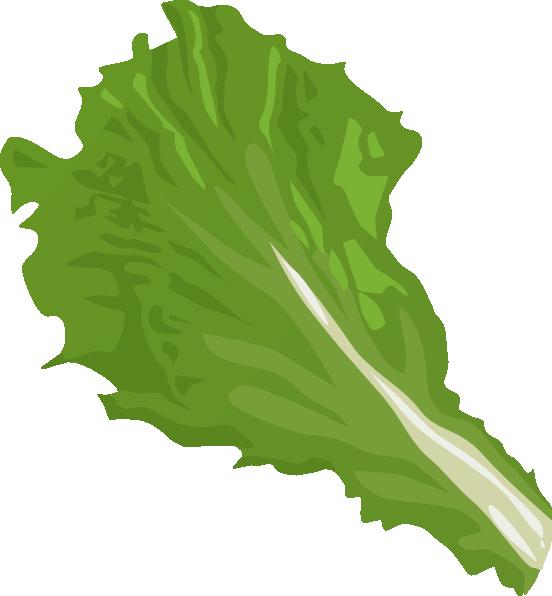 Romaine lettuce clipart.