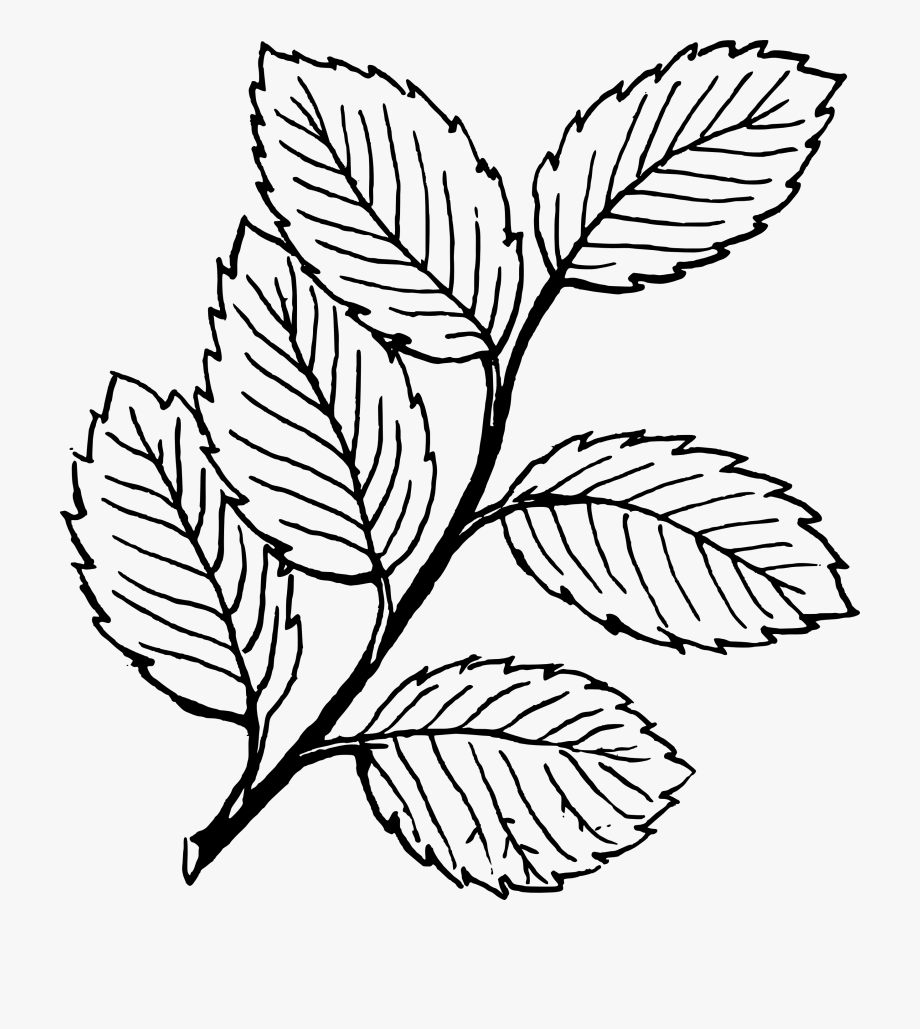Clipart Of Leaf, Leaf At And Leaf Line.
