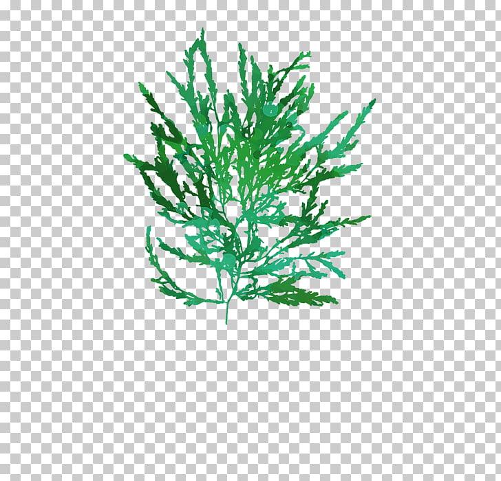 Twig Plant stem Leaf Line Aquarium, seaweed PNG clipart.