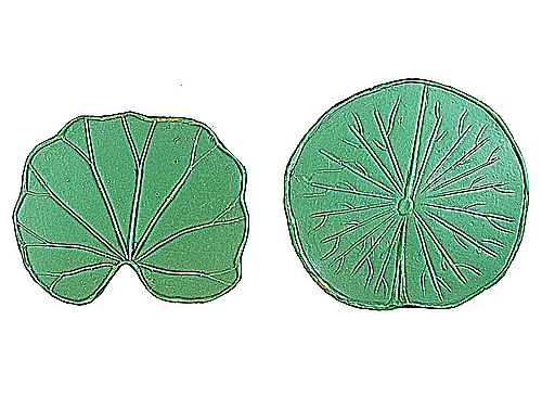 Water lily leaf clipart.
