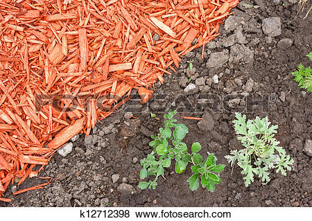 Pictures of Dirt and mulch k12712398.