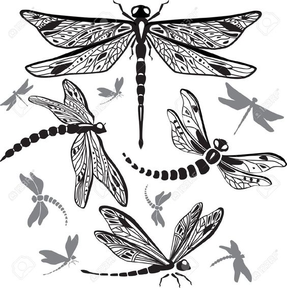 Set Of Decorative Dragonflies Royalty Free Cliparts, Vectors, And.