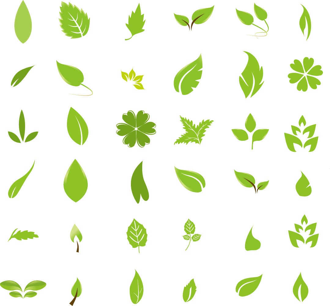 Leaf Graphics.