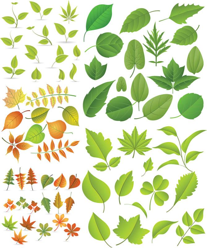 1000+ images about Leaves on Pinterest.