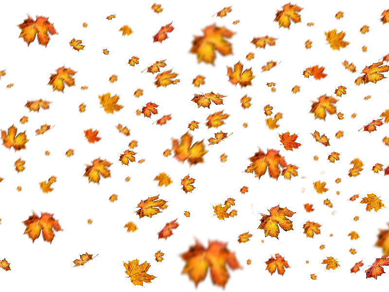 Fall Leaves Png Overlay For Photoshop.