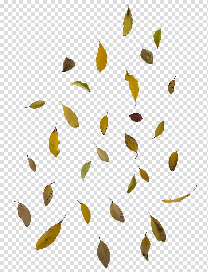 Falling leaf overlay free to use, green leaves transparent.