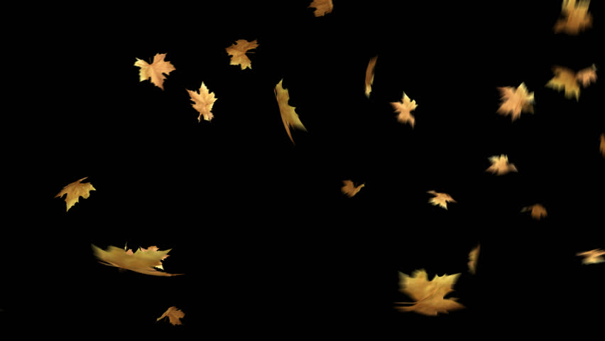 Autumn Leaves Falling with Alpha Stock Footage Video (100% Royalty.