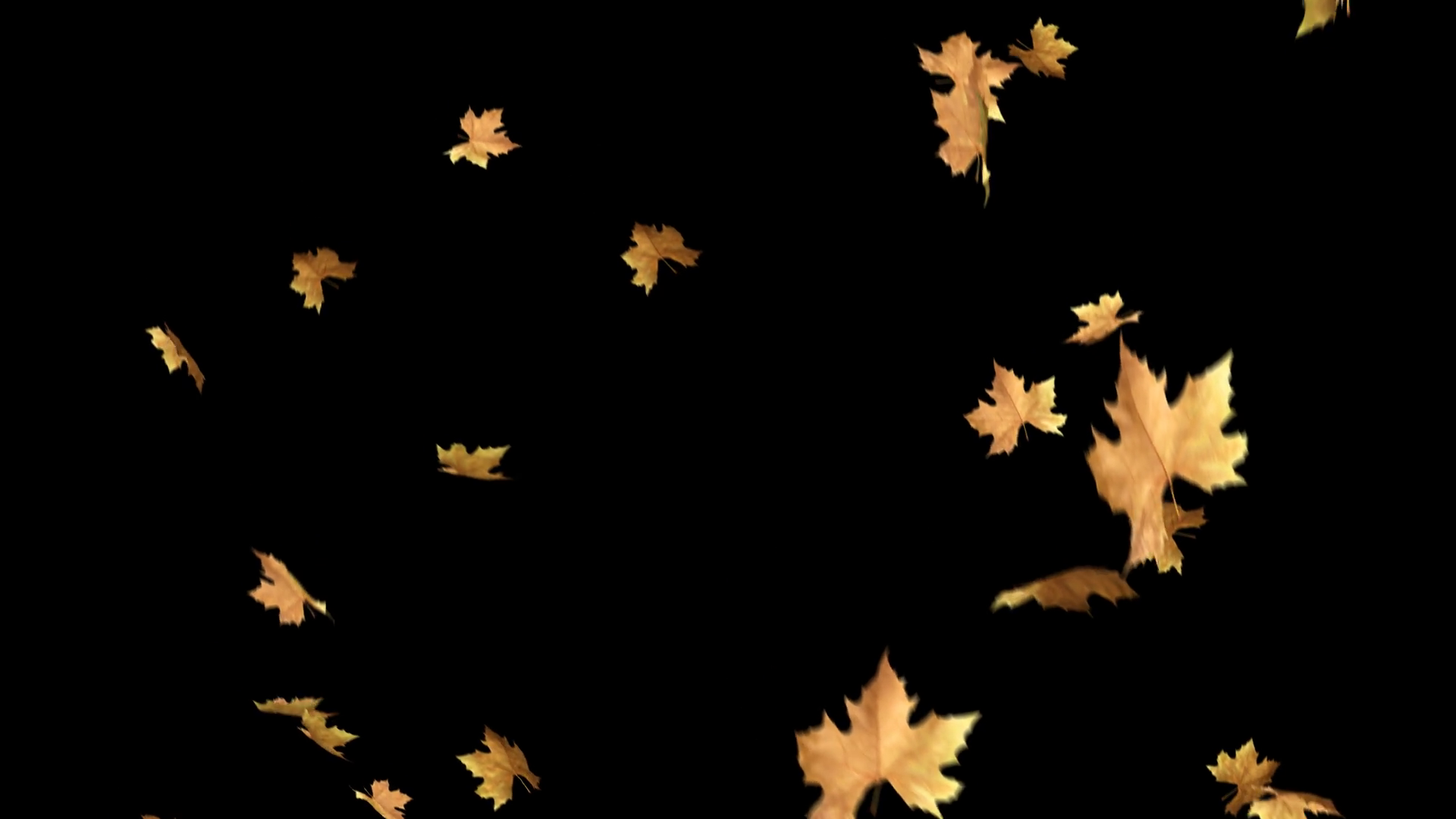 Autumn Leaves Falling With Alpha Channel Loop. You can use this clip for  background or overlays on your image and video project. Motion Background.